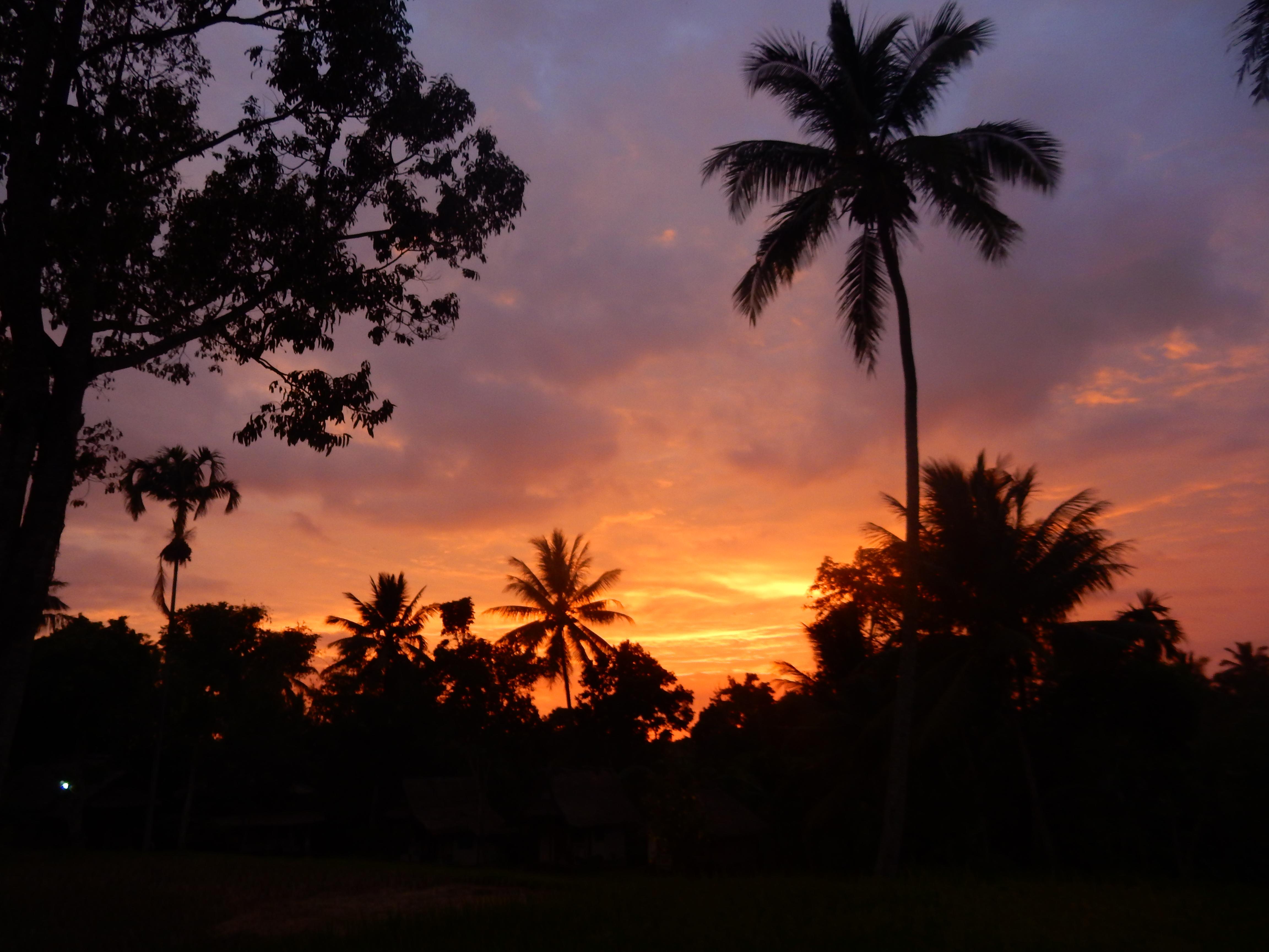 Palmiers coucher de soleil, Tetebatu Lombok, Indonésie