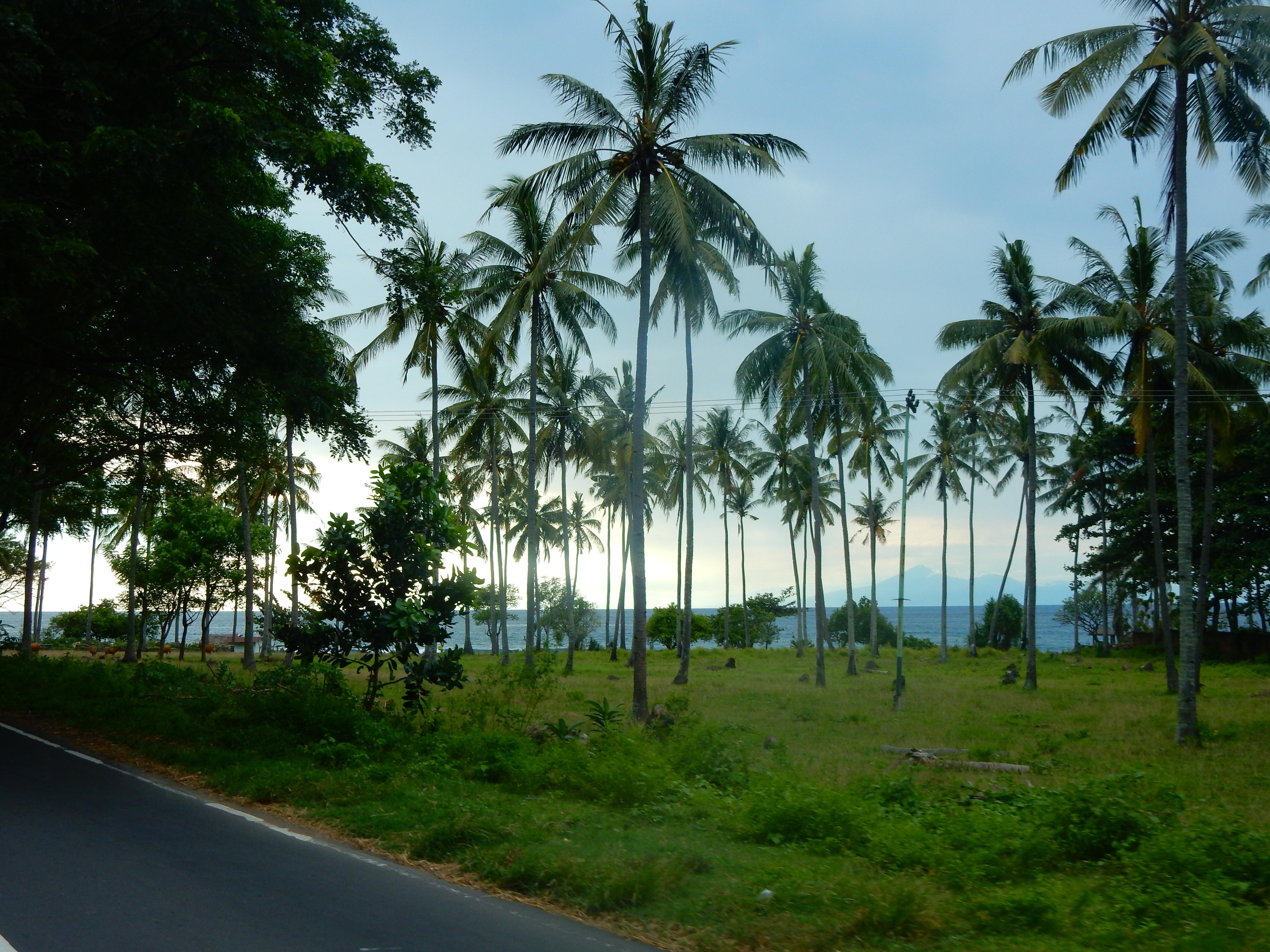 Route Senggigi, palmiers, Lombok, Indonésie.